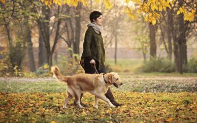 Do Pets Really Provide Health Benefits?